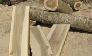 จับไม้พะยูงมูลค่ากว่า5 ล้าน