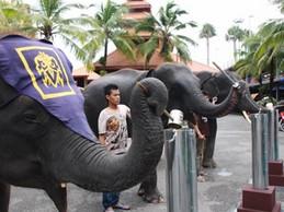 ช้างสวนนงนุช