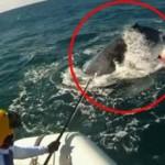ช่วยปลาวาฬ