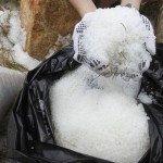 เม็ดพลาสติกเกลื่อนหาดฮ่องกง