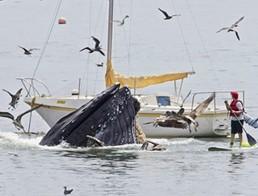 ฝูงวาฬยักษ์
