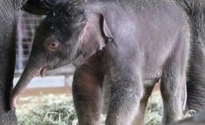 ลูกช้าง