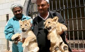 สงครามเยเมน-สัตว์หิวโหย